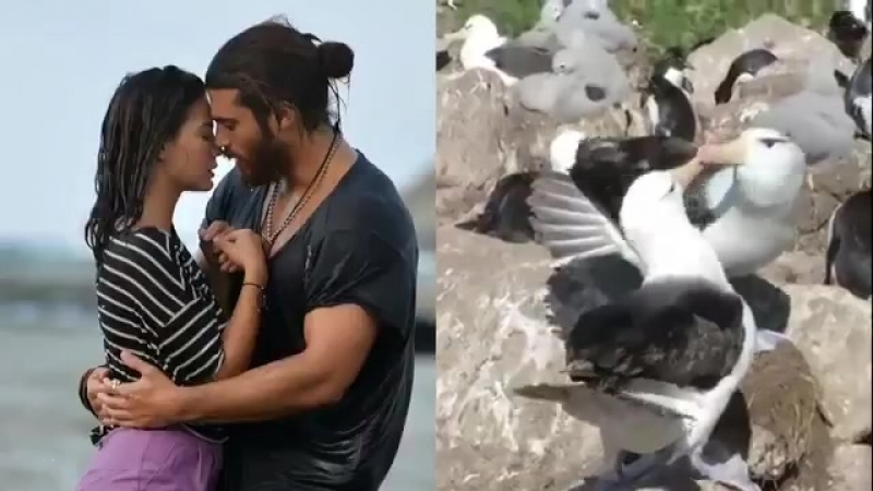 CanEm Look....Its that simple - Just do it like these Albatross - And now KISS you two - ErkenciKuş CanYaman DemetÖzdemir Sadece