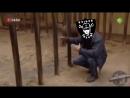 заебатая клетка
