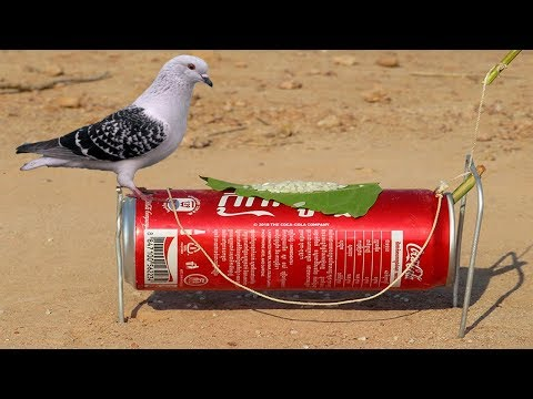 DIY Simple Bird Trap - How to Make a Simple Bird Trap Using Cans Coca Cola