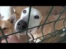 Приют для животных Рязань Телков Сергей и Бурачкова Ирина