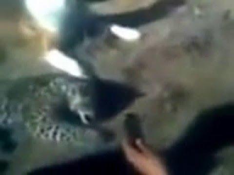 Алабай убил ягуара