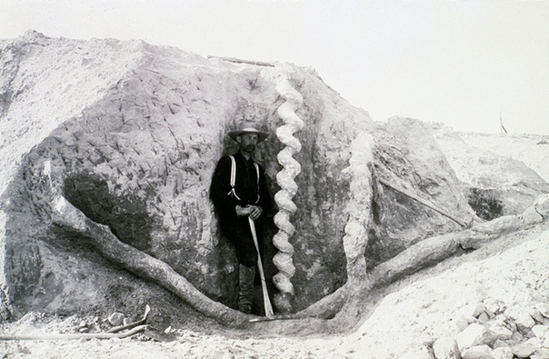 Штопор дьявола так что же это такое и причем тут бобры Эта история началась в середине ХІХ века. Владельцы фермы в округе Сиу (штат Небраска) обнаружили странные каменные образования в земле. С