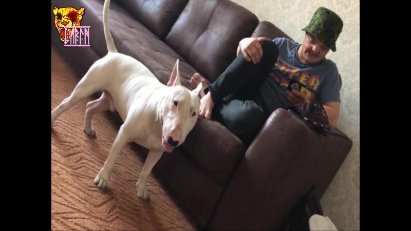 Трудовые Будни | День из жизни Сусанина | Пёс и Сус