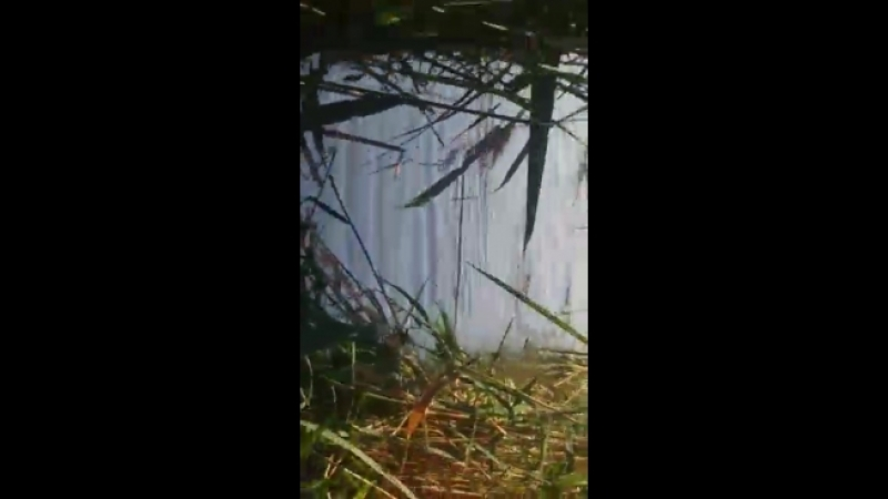 Video-c0e95ceb71127bfb7b7e64933edcb03b-V.mp4