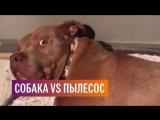 Пылесос VS собака