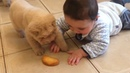 Adorable Babies Playing With Dogs and Cats - Cute Babies and Pets Compilation 2018