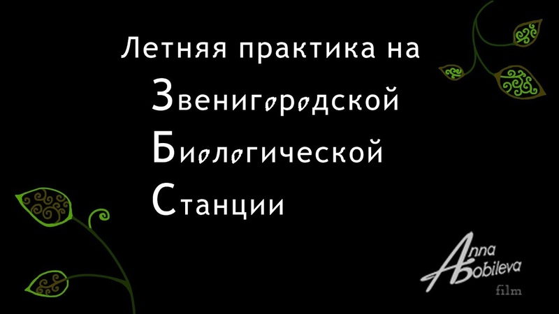 Летняя практика на Звенигородской биологической станции МГУ 2018