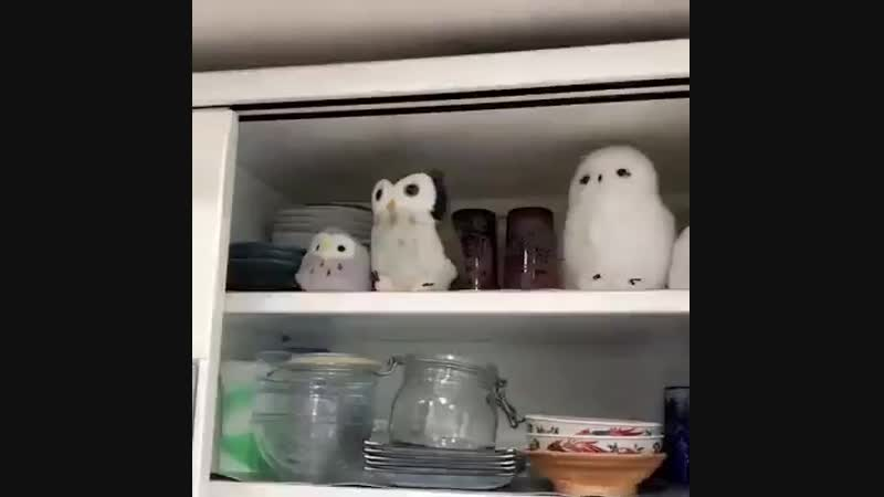 Забавные видосики с совами!