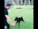 Из инстаграма Сильвестра Сталлоне Это наша собака Эйс. Ему 11 месяцев... Истинный друг человека