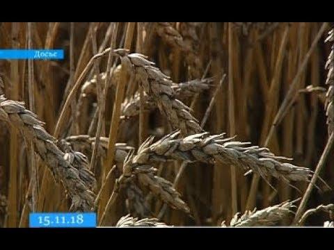 Черкащина у трійці областей-лідерів в Україні за рівнем урожайності зернових