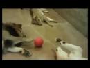 Смеха Вам в ленту . С котами. Всем позитива!🤣😂🤣😂🤣😂