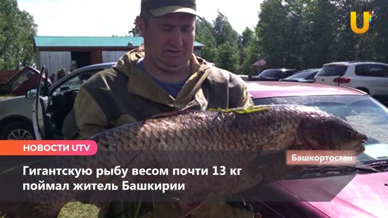 Новости Уфимского района (Иглино, Языково, Кармаскалы) за 20 июля
