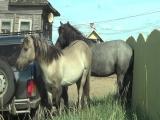 лошадка и забор