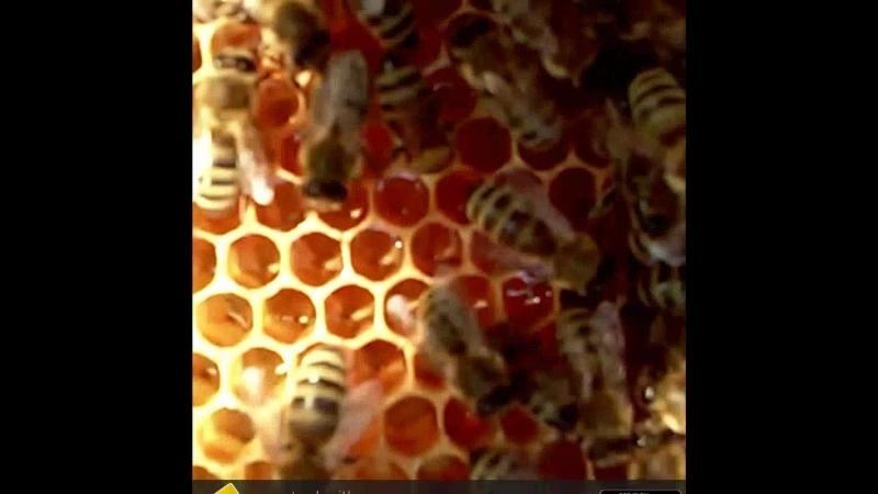 Мёд в сотах. Пчелы. 🐝
