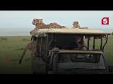 Наглые животные в сафари