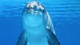 Дельфины на Лазурном берегу