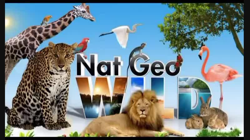 Дикие животные на Английском языке для детей Wild animals 2