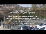 #Israël détruit cinq maisons dans les Territoires Occupés de Jérusalem-Est, 21 personnes sont sans abri