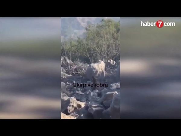 PKK TERÖRİSTİN SAG YAKALANMA ANLARI