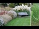 Растут много лет, требуют минимум удобрений и ухода! Злаковые травы вне времени, вне сезона