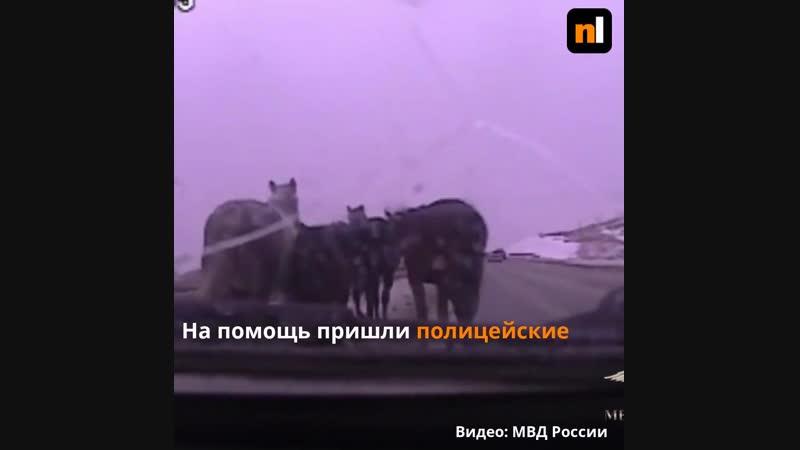 Табун лошадей и полицейские в Красноярске