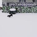 mirsobak_dred video