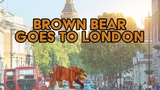 Brown Bear Goes to London - Learn About London (Eric Carle &amp Bill Martin Jr)