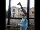 Весёлая пятница 2018 ура я побывала в зоопарке