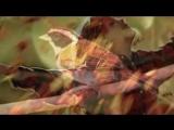 Chovendo na Roseira, de Tom Jobim - Elis Regina