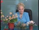 Наталья Земная - 29/01/2010 - На заданную тему