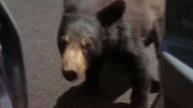 Решил покормить медведя