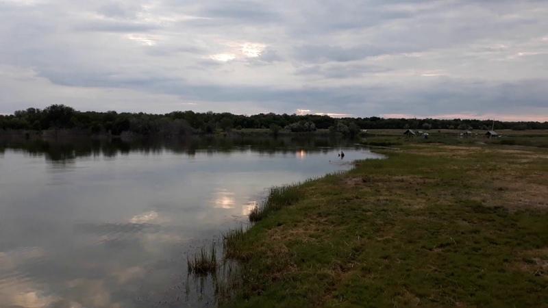пруд Черноморец 18 06 19г Запуск рыбы
