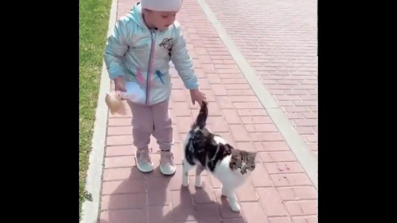 Тея играет с котом