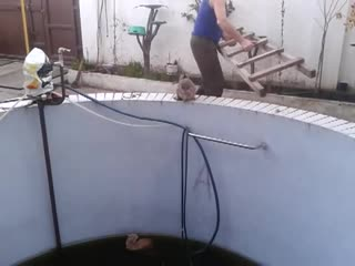 Карма котейке | Мемпринтон