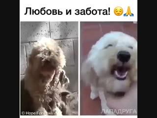 Вот что с животными делает любовь, забота, ласка и внимание!!! 😘