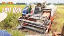 Máy Cắt Lúa KUBOTA DC60 Bị Lầy Phải Nhờ Máy Cộ Giải Cứu Xổ Số Đây Rồi