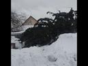 Чиновники сначала срубили елку у жителя, а после Нового года выбросили её обратно на участок. Город Топки Кемеровская область (VHS Video)