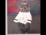 Подборка видео от самого популярного котика интернета