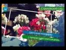 25 августа в Самаре в Струковском саду пройдет Фестиваль цветов