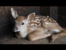 «Бэмби-бум» в пермском зоопарке