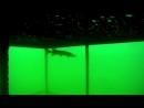 Подмосковная подводная подружка дайверов