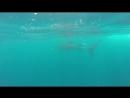 китовые акулы 2