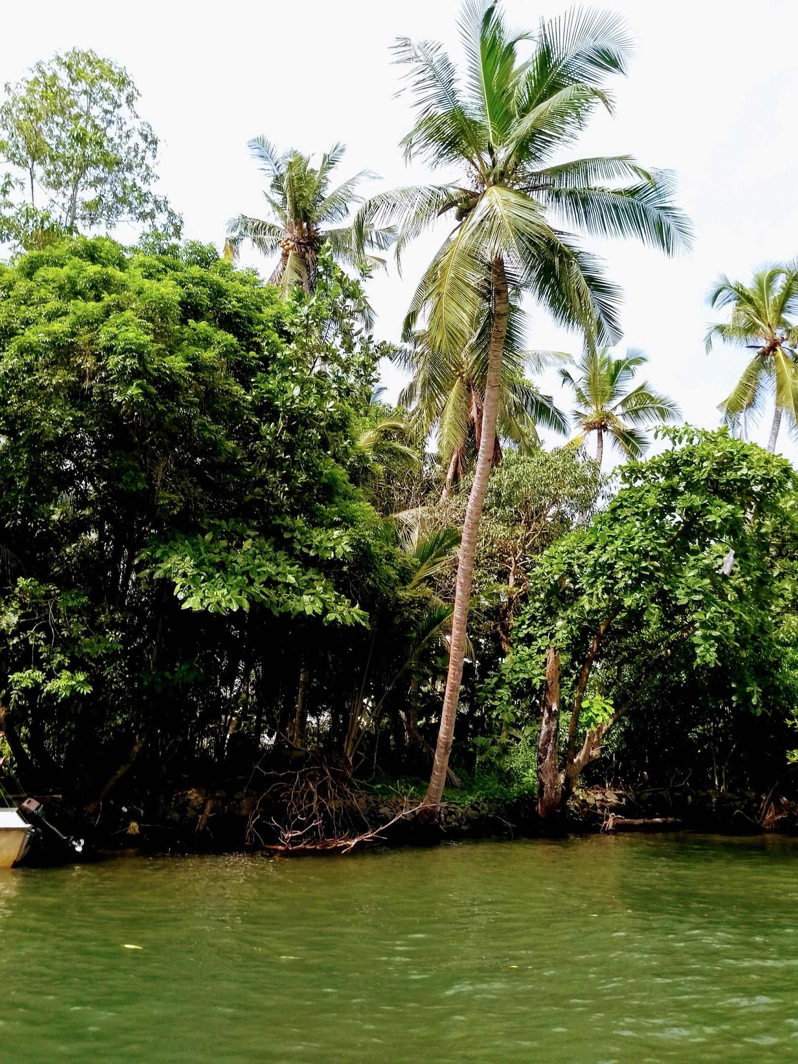 Шри Ланка (фото) - Страница 11 MSvKJi0NdIs