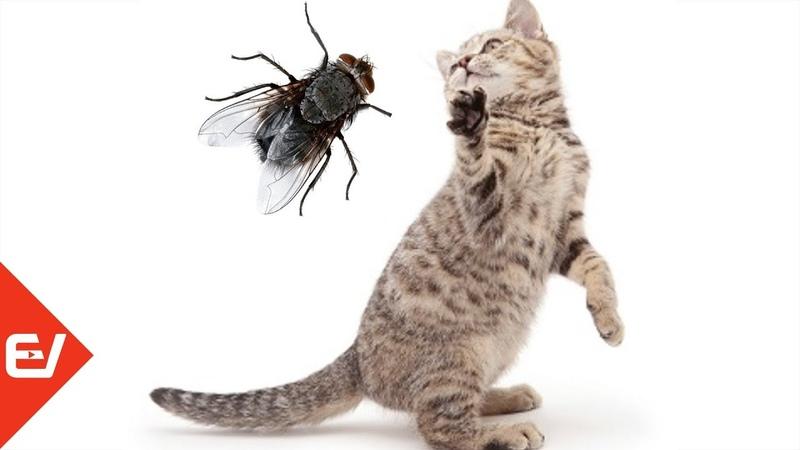 Муха цокотуха Видеоигра только для кошек