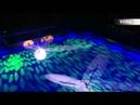 2008 Angels on Ice - Yuna Kim Johnny weir CassiopeiaHoney