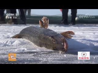 Зимняя рыбалка ''Дун Бу'' на озере Урунгу (Синцзян-Уйгурский автономный раон). Фестиваль зимней рыбалки ''ДунБуЦзе''. Посетители