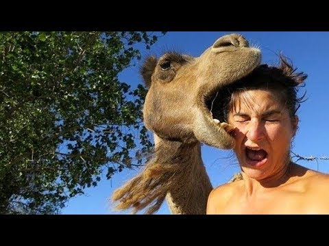 Смешные нападения животных на людей \ Funny animal attacks on humans