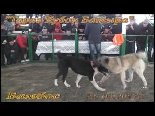 Батыр Арена г. Тараз 2017 г.15 ролик