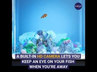 Bluenero: World's Most Advanced Smart Aquarium