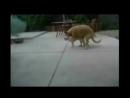 смешные видео про котов ржачные котэ